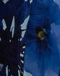 mimi-liberte-d-bluse-isa-_blue